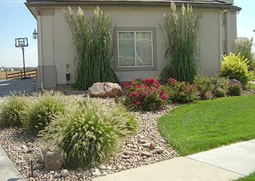 on xeriscape planters